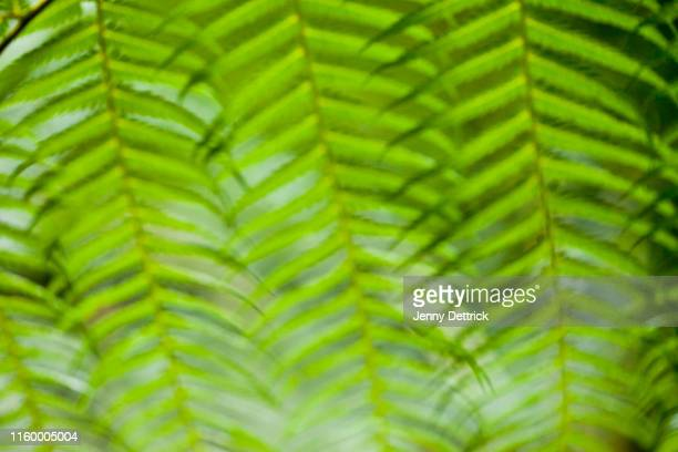 fern pattern - lush stock pictures, royalty-free photos & images