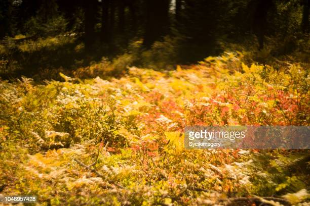 fern plants on forest floor, selective focus - forest floor stock photos and pictures