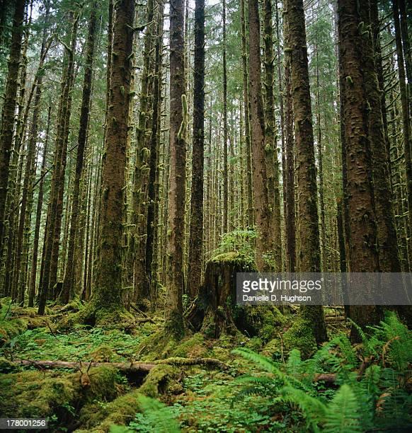 Ferns and stump in rainforest