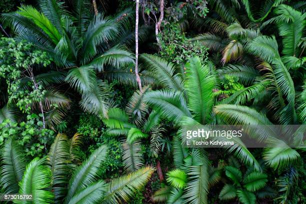 ferns at the gamboa rainforest in panama - panama stock pictures, royalty-free photos & images