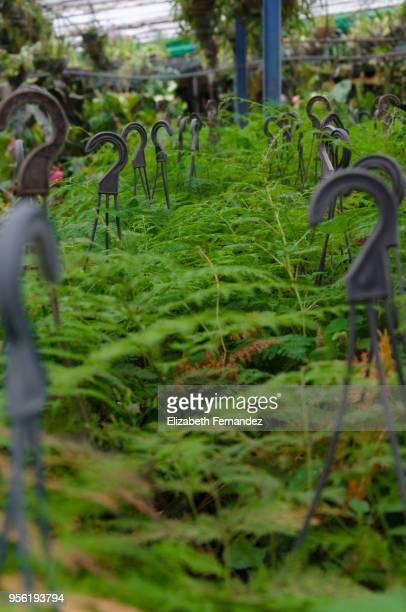 Ferns on sale in nursery