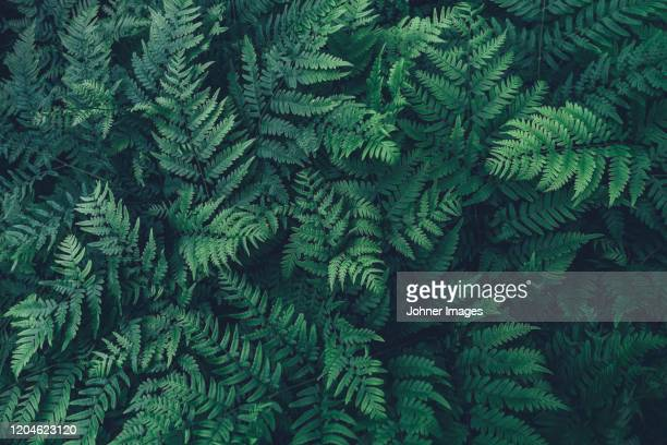 54 718 Fern Photos And Premium High Res Pictures Getty Images