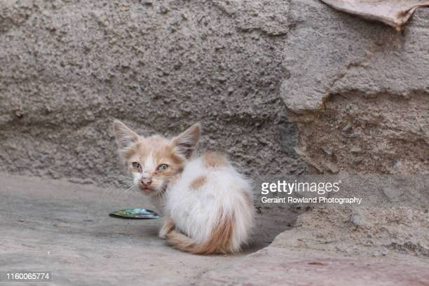 ferral cat - stray animal stock pictures, royalty-free photos & images