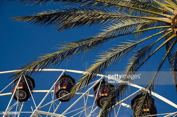 Ferris Wheel and palms