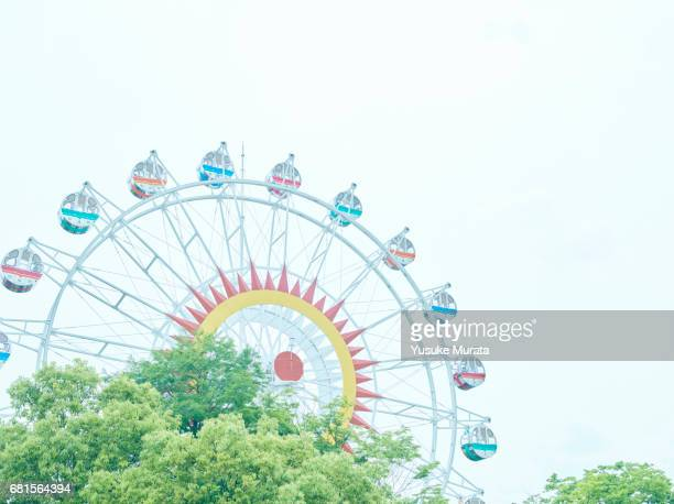 Ferris wheel behind tree