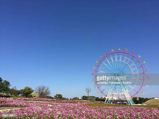 Ferris Wheel On Flower Bed Field Against Blue Sky