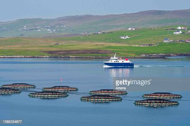 Ferry boat Linga sailing past sea cages / sea pens / fish cages from salmon farm in Laxo Voe, Vidlin on the Mainland, Shetland Islands, Scotland, UK.