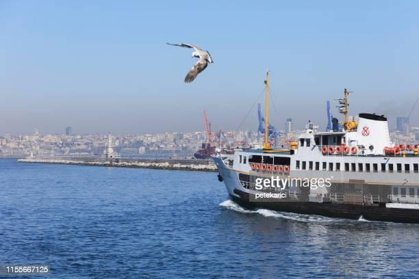 ferry, istanbul, turquia - grupo mediano de animales - fotografias e filmes do acervo