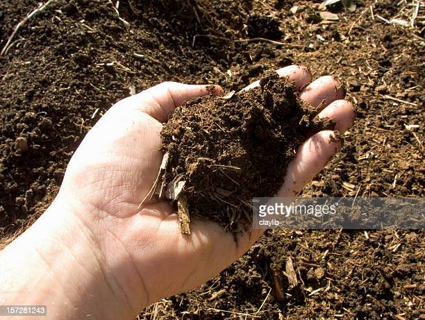 fertile garden; compost sample - salinity stock pictures, royalty-free photos & images
