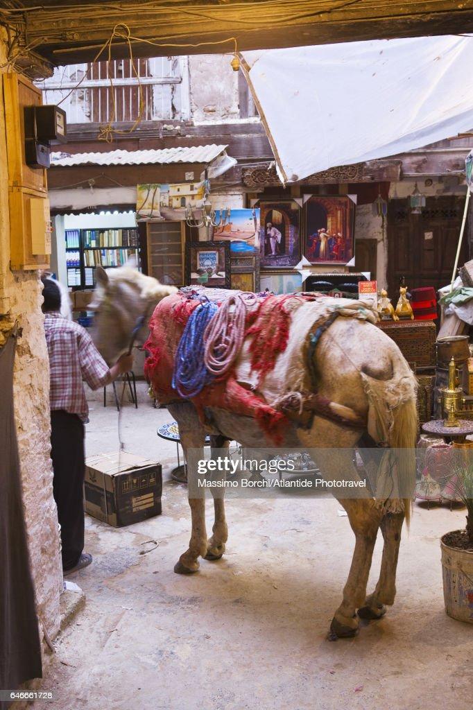 Fes el Bali (Old Fes), Medina, a mule in a courtyard : Photo