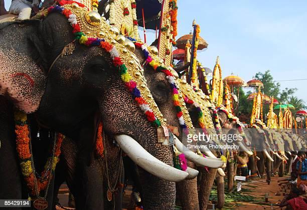 festival elephants - kerala elephants stock pictures, royalty-free photos & images