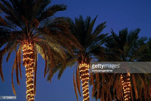 Festive Decorated Palm Trees