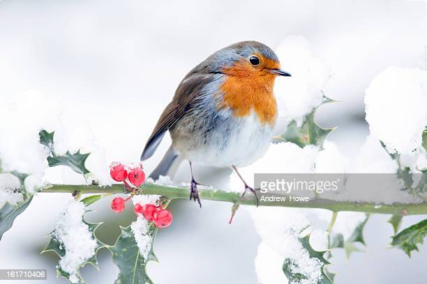 Festive Robin Scene