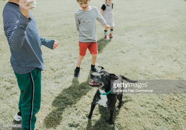 fetch! - excitement stock pictures, royalty-free photos & images