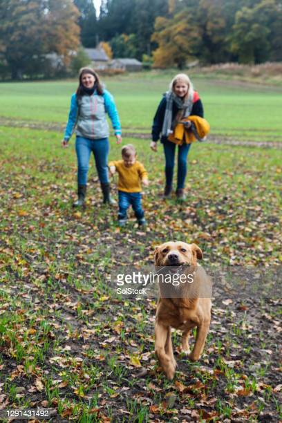 fetch the stick - babyhood stock pictures, royalty-free photos & images