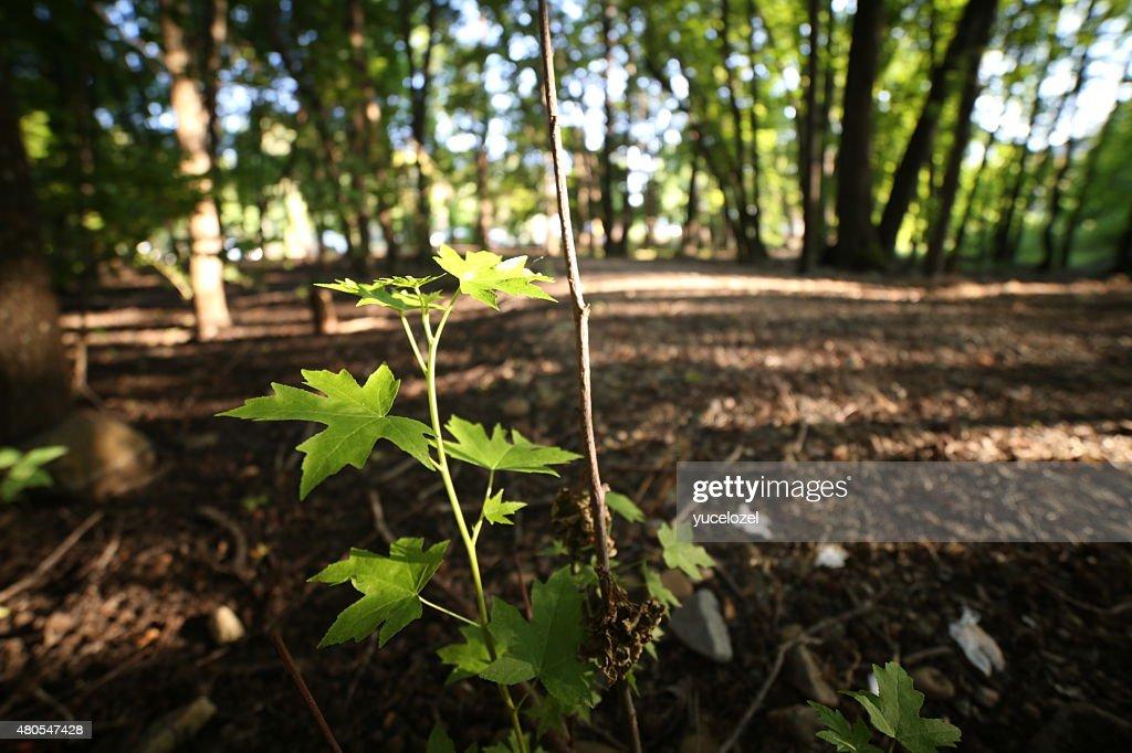 Fethiye Gunluklu Wald : Stock-Foto