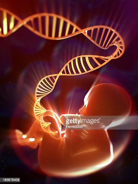 Fetus with DNA umbilical cord