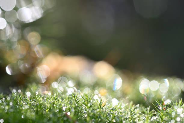 Feuchtes Moos in der Sonne