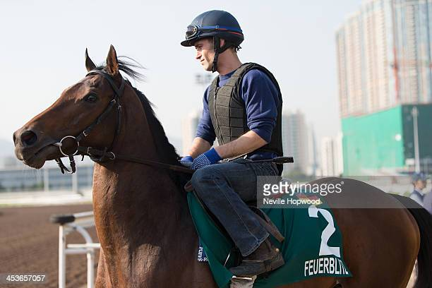 Feuerblitz gallops on the All Weather Track during a Hong Kong International Trackwork Session at Sha Tin racecourse on December 5, 2013 in Hong...
