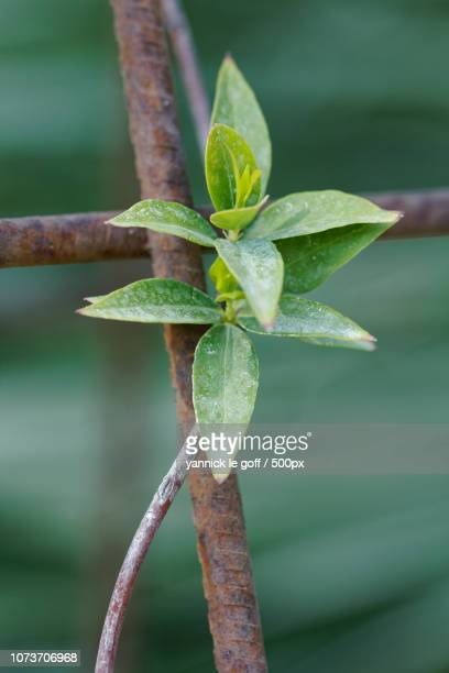 vines with leaves stock photos and pictures getty images