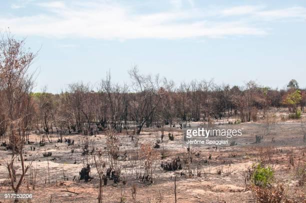 feux de brousse dans la région de boeny - madagascar fotografías e imágenes de stock