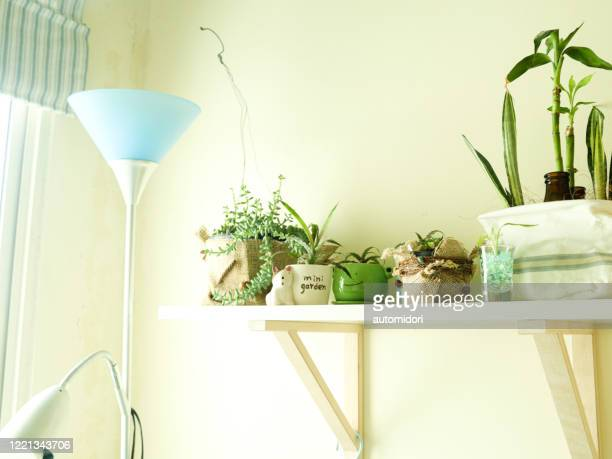 a few houseplants placed on a wall rack forming a mini indoor garden - 収納ラック ストックフォトと画像