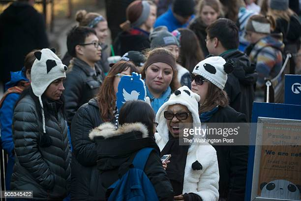 A few hundred panda fans arrive to visit 5 month old Bei Bei at the Washington National Zoo in Washington DC on January 16 2016 Bei Bei the 5month...