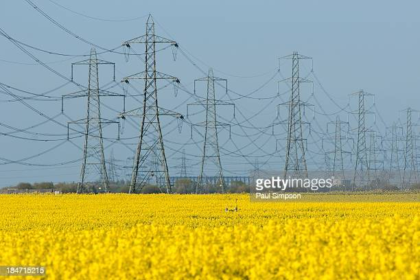 Few lines of pylons take the electricity away from a power station across a field of yellow rape seed in spring 2009. This scene is near Scunthorpe...