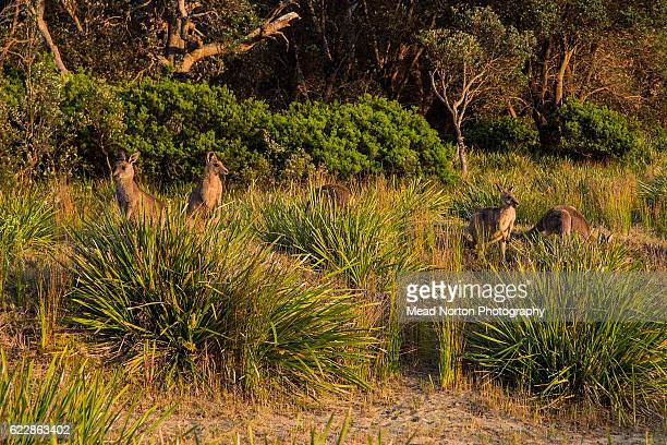 A few of the locals showing their interest in the Adventure Race World Championship on November 11 2016 in Shoalhaven Australia