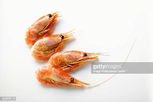 A few shrimps