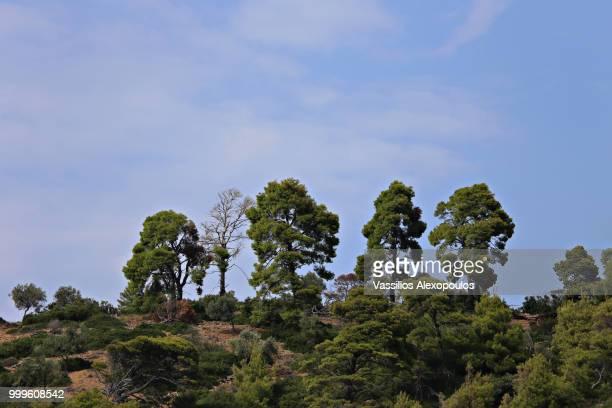 Few Trees II