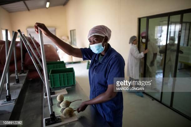 Fhatuwani Maguvha prepares to crash a baobab fruit in order to extract its seeds at Eco Products lab headquarters in Louis Trichardt in the Limpopo...