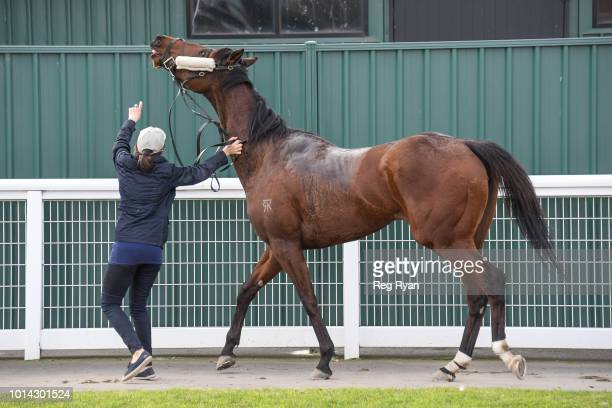 Fica Gal after winning the Nevan Hunniford BM64 Handicap at Geelong Synthetic Racecourse on August 10 2018 in Geelong Australia