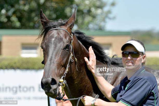Fica Gal after winning the The Big Screen Company Hcp at Mornington Racecourse on December 13 2017 in Mornington Australia