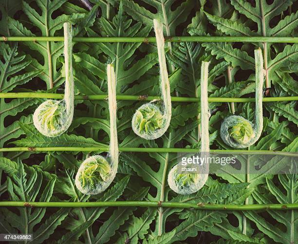 fiddlehead music notes - musical note stock photos and pictures
