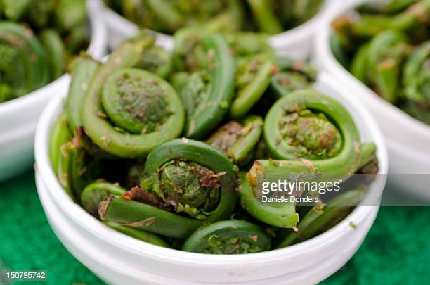 """fiddleheads at the market - """"danielle donders"""" stock pictures, royalty-free photos & images"""