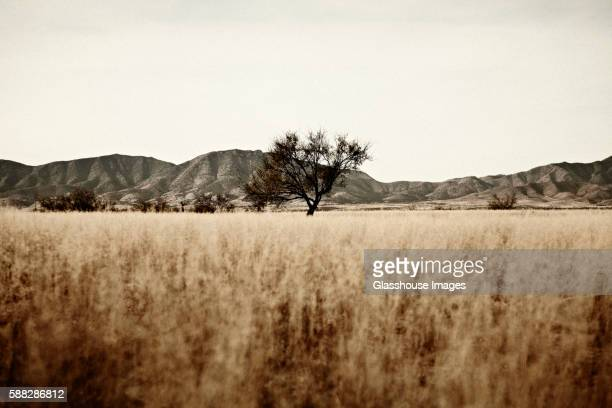 field and mountains, tombstone, arizona, usa - tombstone arizona stock pictures, royalty-free photos & images
