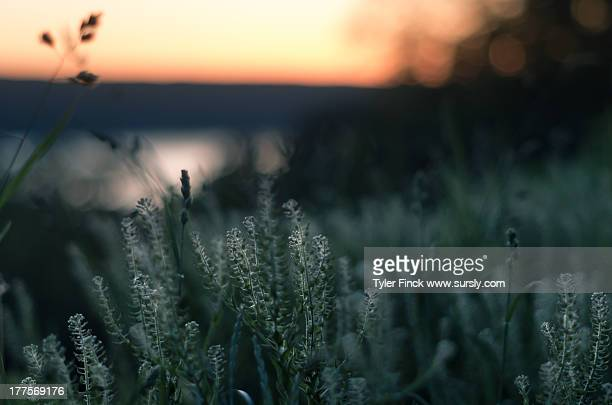 field at dusk - sursly stock pictures, royalty-free photos & images