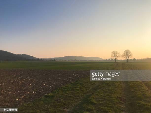 field at sunset, near Tübingen, Baden-Württemberg, Germany