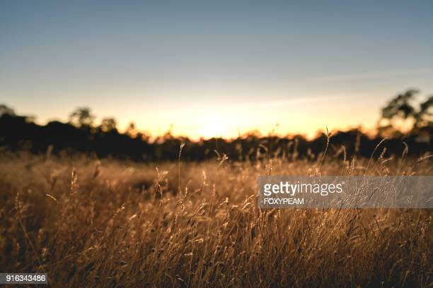 field background - tall high stock pictures, royalty-free photos & images