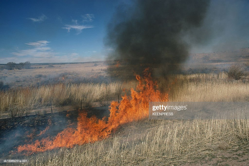 Field being torched : Foto stock