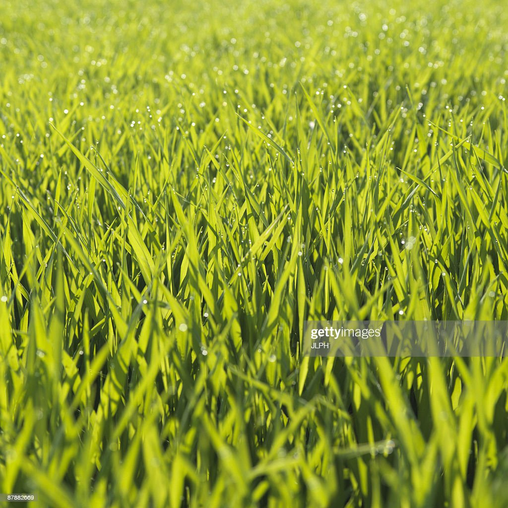 Field,  close-up : Stock Photo