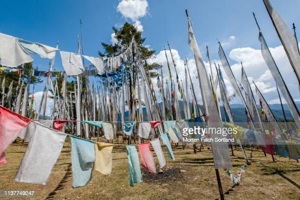 a field full of prayer flags in bumthang district, bhutan - ブータン ストックフォトと画像