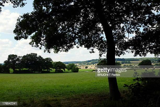A field in Bucklebury on July 26 2013 in BuckleburyEngland Bucklebury is the home of the Middleton family and where Catherine Duchess of Cambridge...