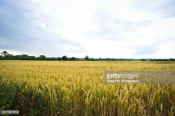 Field in Kent, England