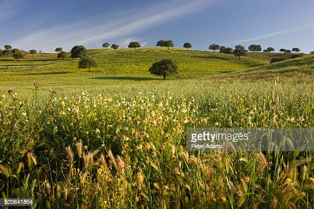 field in spring - peter adams stock pictures, royalty-free photos & images