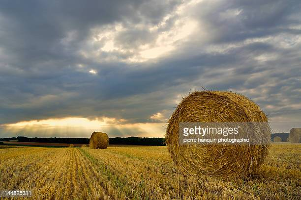 Field in sunset with straw bales