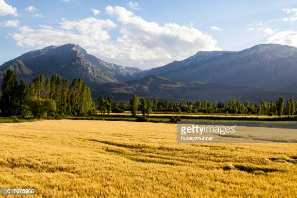 field in the mountain valley - slovakia stock pictures, royalty-free photos & images