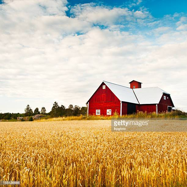 Field in the summer with very large red barn