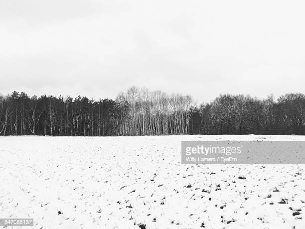 Field In Winter